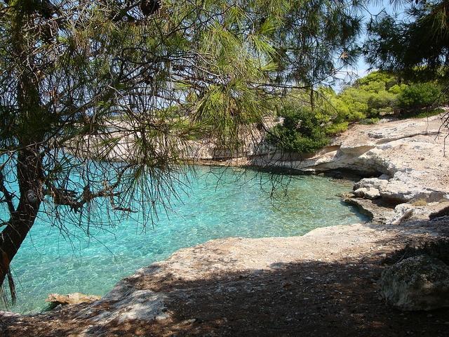 Beach at Moni island, Aegina, Greece.  I remember having lunch under this tree :)