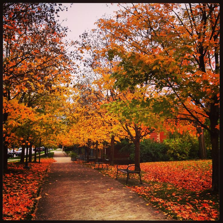 Beautiful autumn North York, Ontario, Canada October 24, 2013
