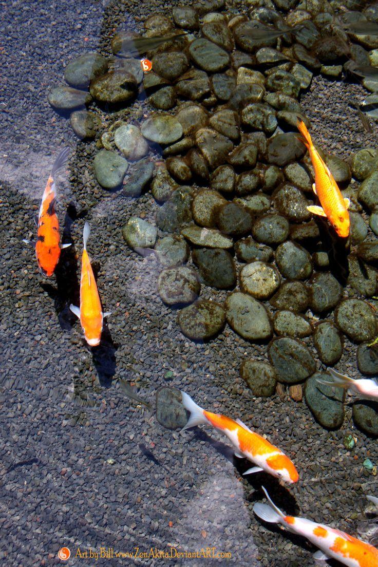 Les 385 meilleures images du tableau bassins carpes koi for Bassin de carpe koi