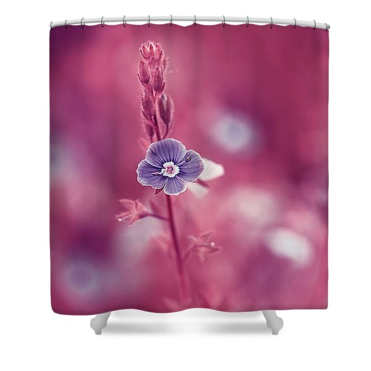 Beautiful Shower Curtain featuring the photograph Small Romantic Violet Flower by Oksana Ariskina. Small blue wildflower forget-me-not, closeup view on violet pink toned background. Available as mugs, posters, greeting cards, phone cases, throw pillows, framed fine art prints, metal, acrylic or canvas prints, shower curtains, duvet covers with my fine art photography online: www.oksana-ariskina.pixels.com #OksanaAriskina