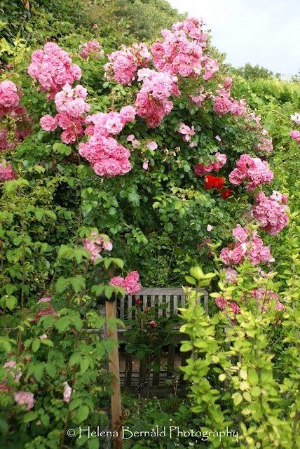 Hidden garden retreat