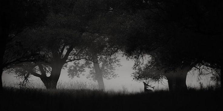 Fekete-fehér természetfotók kategória, első díj - Ifj. Kovács Tamás: Erdei mese. Szarvas a gemenci erdőben