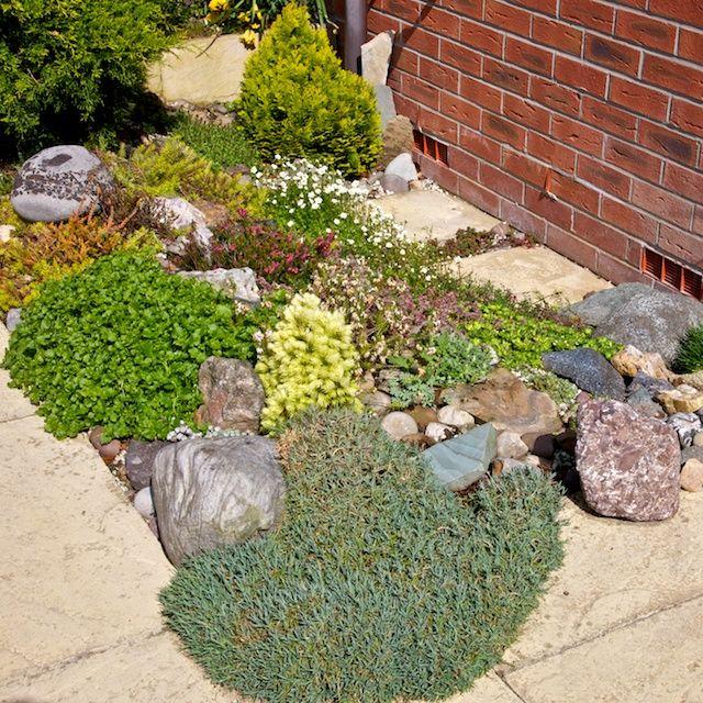 Die besten 25+ saftiges Steingarten Ideen auf Pinterest - kleiner steingarten bilder