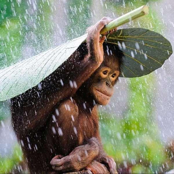 Veja imagens que concorrem a prêmio de fotografia de 2014