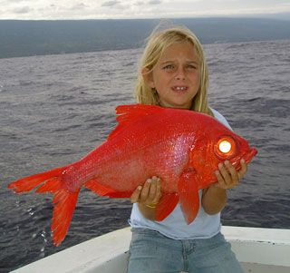 Kona Deep Sea Fishing   Charters for Family Fishing in Kona
