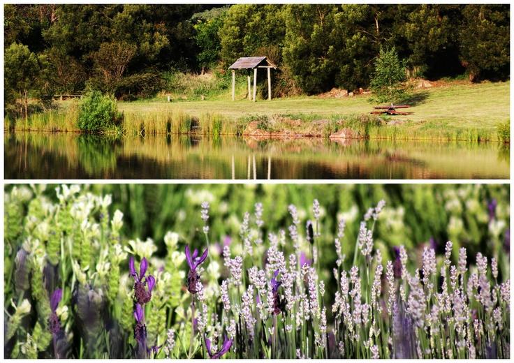 Lake and Lavender