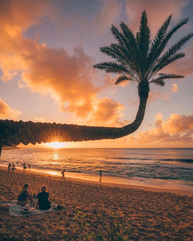 @vincelimphoto Instagram #palmtree #ocean #water #tree #sky #beach #sun