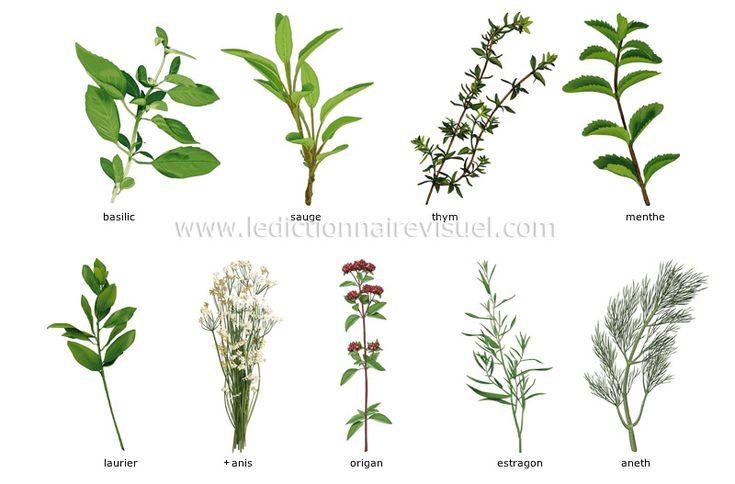 fines herbes dictionnaire visuel