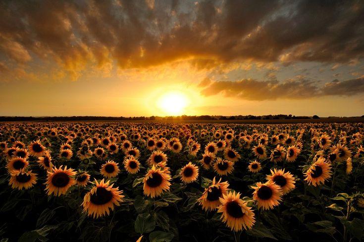 Yeni Bir Güne Merhaba..