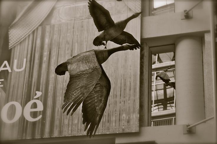 Birds at Eaton Centre