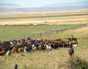 Roaring Springs Ranch Doubles Its Herd Thanks to Holistic Management