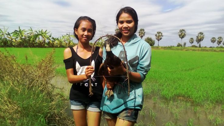 Top 10 Traditional Bird Trapping In Cambodia|  Beautiful Girl using Bird...