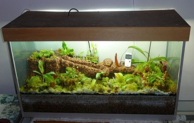 How Difficult Is Building Maintaining A Terrarium Savagegarden