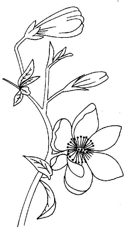 Best 25 coloriage fleur ideas on pinterest fleur - Fleurs a dessiner modele ...