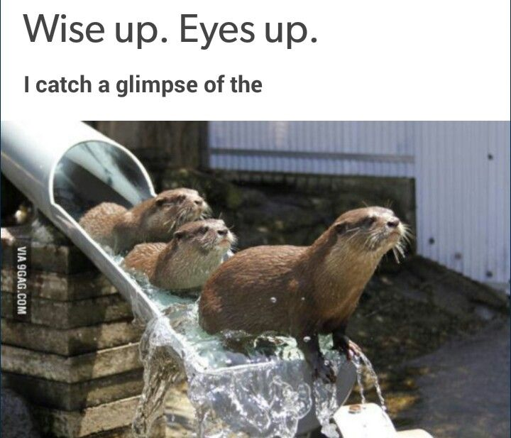 The otter slide...