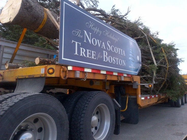 For more than 40 years it's been a Christmas tradition for the province of Nova Scotia to ship one of its biggest and best Christmas trees to Boston to thank the people of Boston for the emergency assistance they provided after the Halifax Explosion in 1917. Relief from Boston was the first to arrive the day after the horrendous explosion which killed 1,900 people and wounded another 9,000. The New Englanders were also the last to leave.