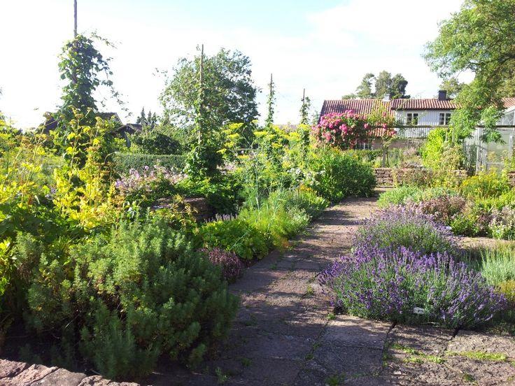 Kryddträdgård. Capellagården