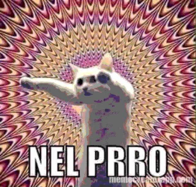 Nel Prro Plantilla De Gato Memes Divertidos Memes Memes Para Comentarios