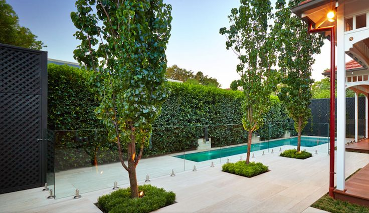 Plants and hedging around pool