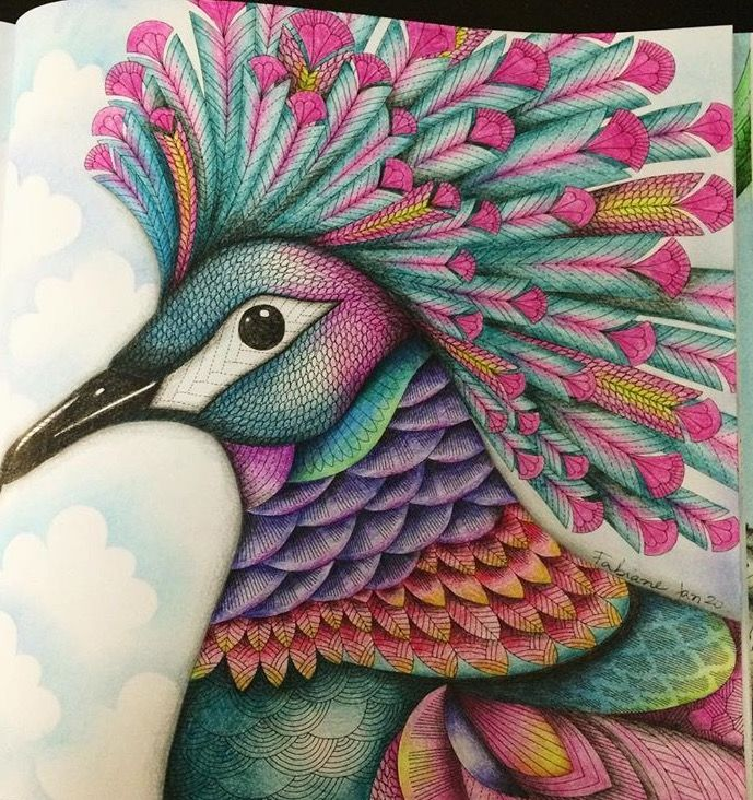 My Colors By Millie Marotta Book Coloring Pages Tropical Birds