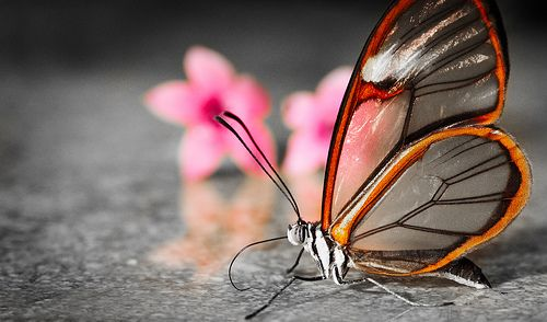 transparent butterfly, by thefost, via Flickr