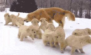 Dog mother plays with her babies