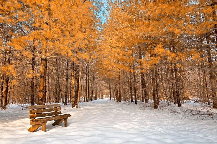 Haiku – Snow to Spring
