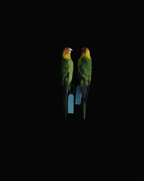Biosophia of Birds by Yoshihiko Ueda, 2007