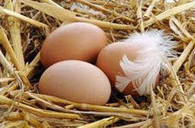 жировик лечение, жировики, жировики на лице, жировики на теле, как избавиться от жировиков, пленка от яиц, удаление жировиков, яйца, яйца ку...