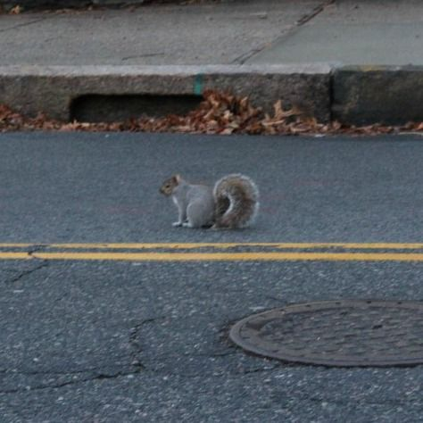 They seem a lot faster in the winter so it has been an almost impossible task to get a good squirrel photo.  But I caught this little jaywalker!