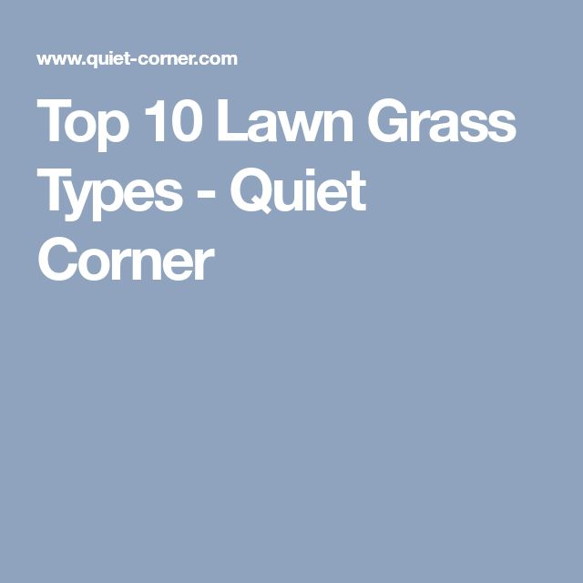 Top 10 Lawn Grass Types - Quiet Corner
