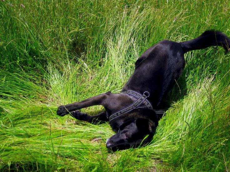 as french people say: Batifoler dans l'herbe! Come dicono i francesi: far capriole nell'erba!