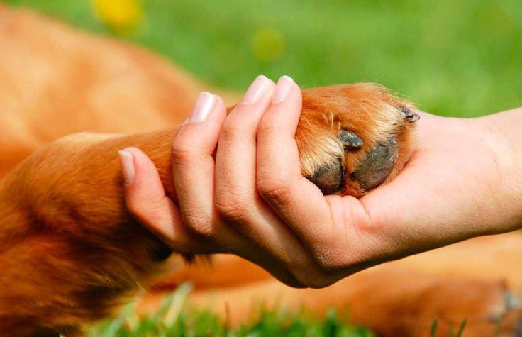 Cómo enseñar a un perro a dar la pata - http://www.mundoperros.es/como-ensenar-a-un-perro-a-dar-la-pata/
