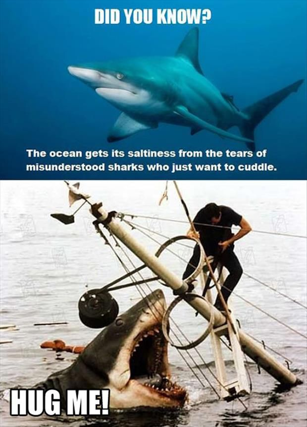 Hug a shark, save the ocean.