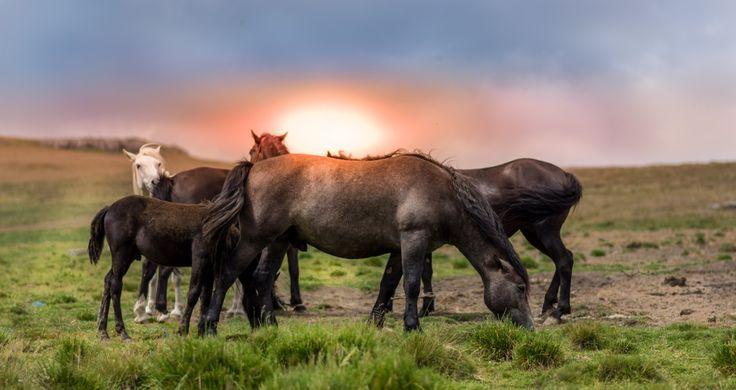 New free stock photo of field sun animal #freebies #FreeStockPhotos