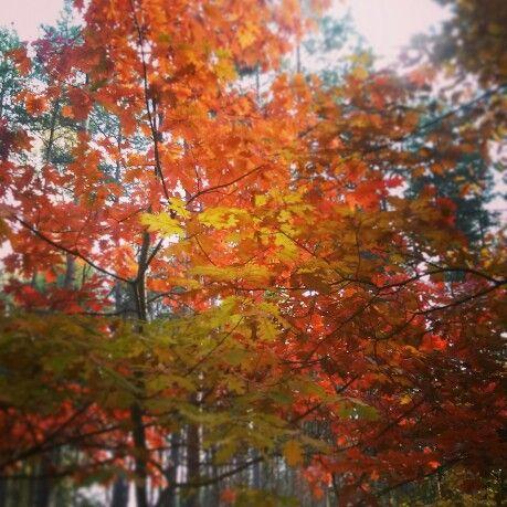 Polish autumn