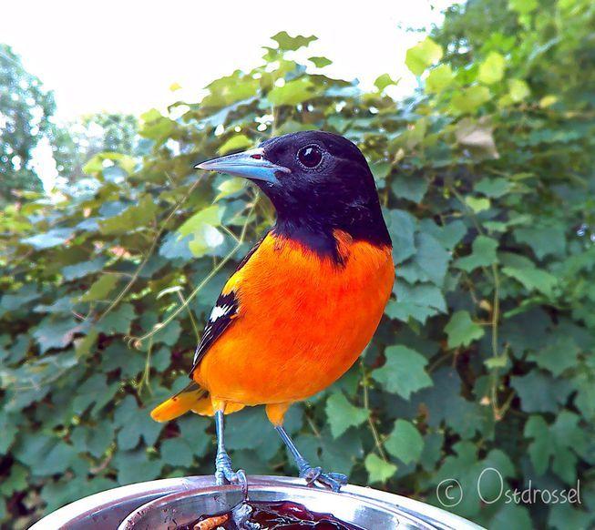 Wildlife Rehab Center Wild Birds Animals Bird