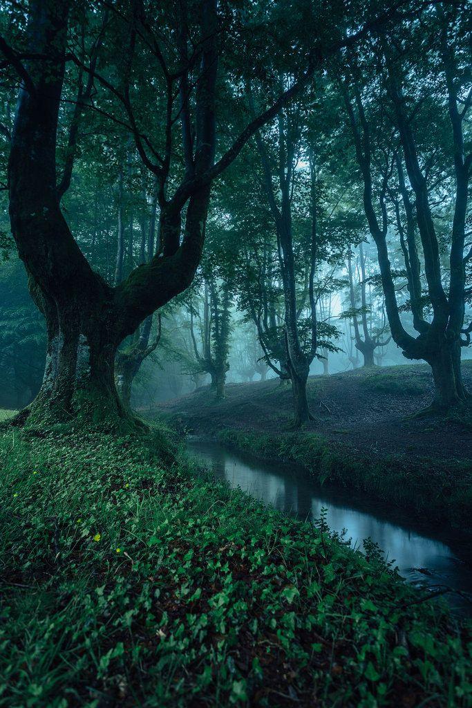 Naast zweinstein is een bos waar Harry en Ron in het bos gaan om naar de grot van de spinnen gaan om erachter te komen wie de geheime kamer had geopend.