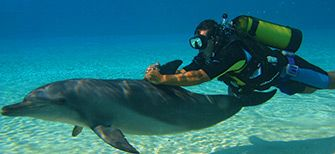 Swim with dolphins at The Atlantis