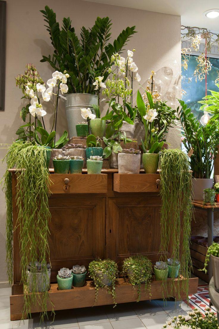 orchidées et succulentes