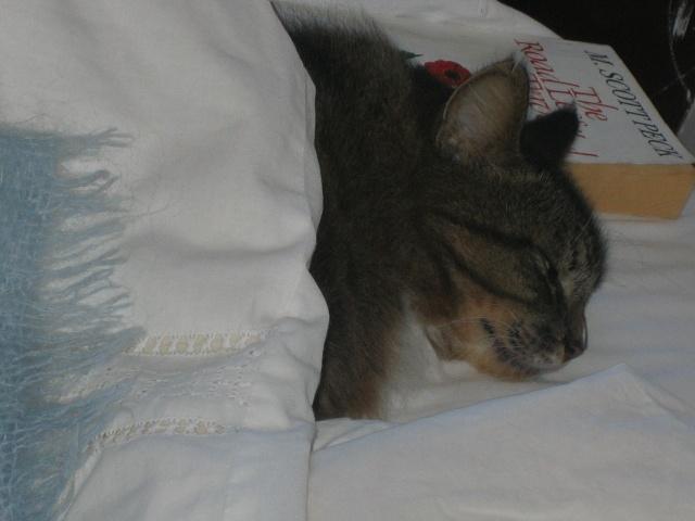 My beautiful cat Motswarie sleeping