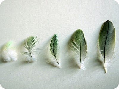 small feathers