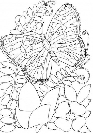 Coloring Pages Of Flowers For Free : 104 best coloring pages images on pinterest