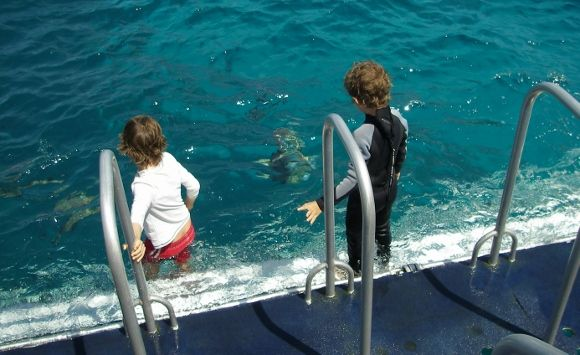 Snorkeling The Great Barrier Reef. from http://worldtravelfamily.com