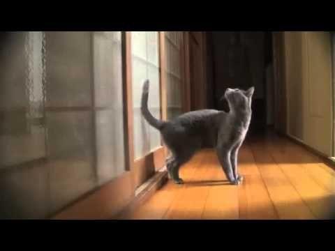Smieszne koty