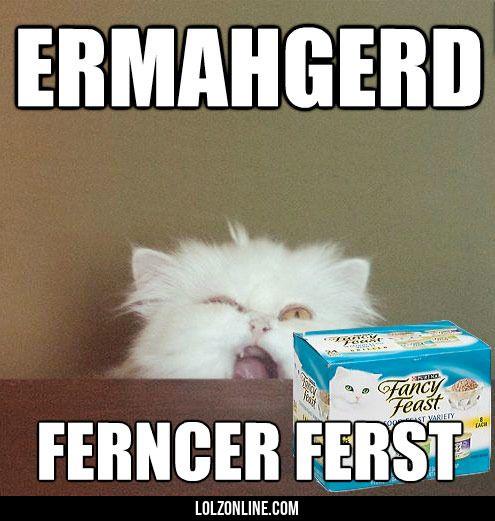 0c5fdad6a0deb2ff6869d249c78db476 ermahgerd meme crazy cat lady 177 best cat memes images on pinterest cats humor, funny animals,Chronic Illness Cat Meme