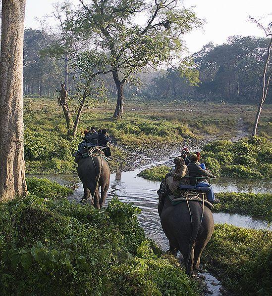 See Shere Khan in Kanha National Park, setting for Kipling's Jungle Book