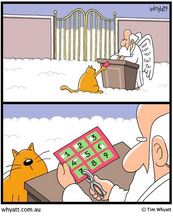 Sua hora está chegando, felino...