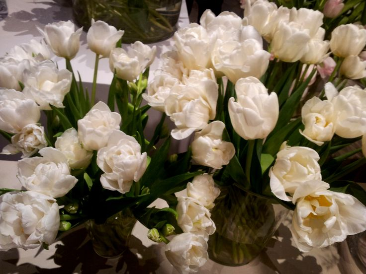 Mondial tulips :)