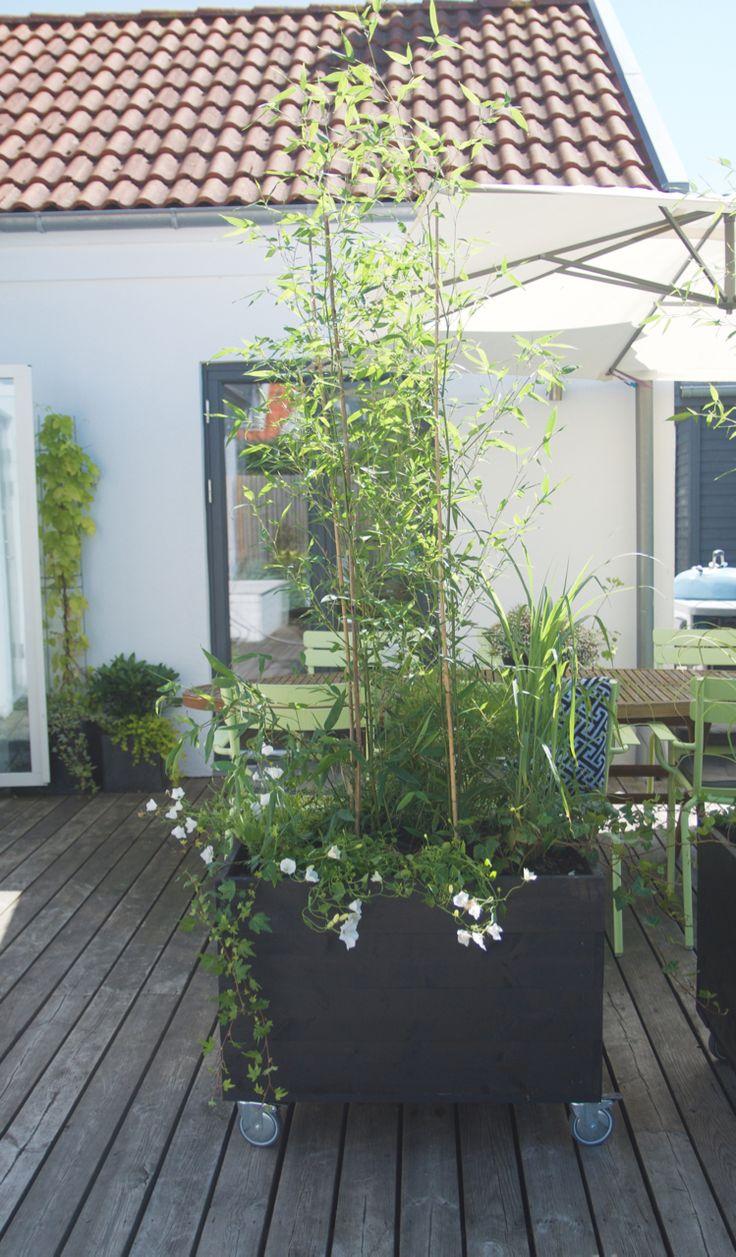 1000  images about trädgård on pinterest